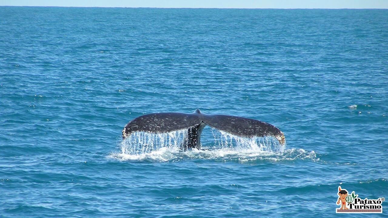 Observação de Baleias 1