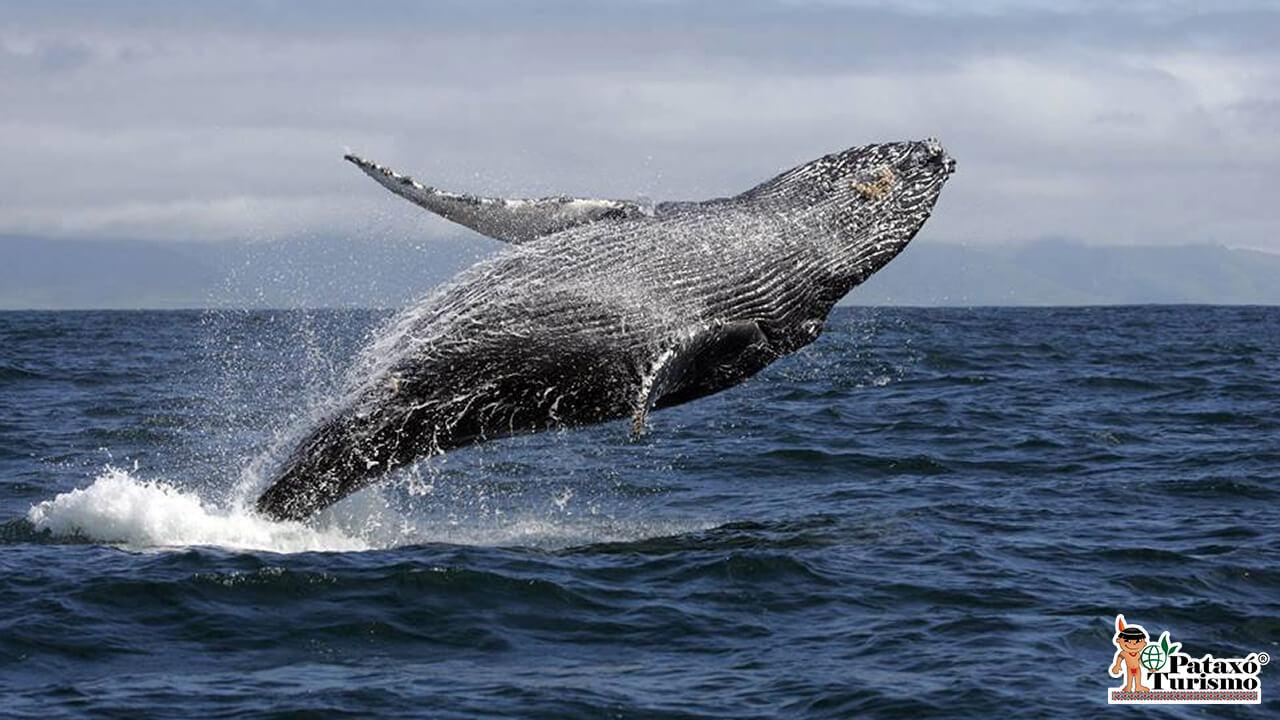 Observação de Baleias 2