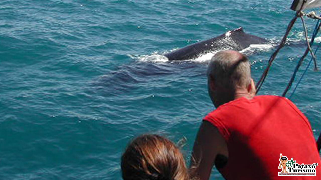 Observação de Baleias 3